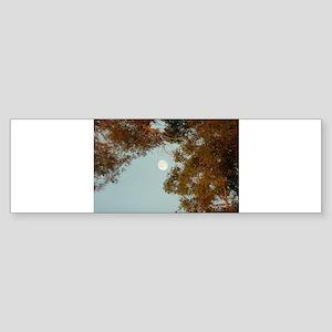 full moon in Thousand Oaks park in Bumper Sticker