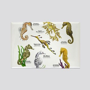 Seahorses Seadragons Magnets