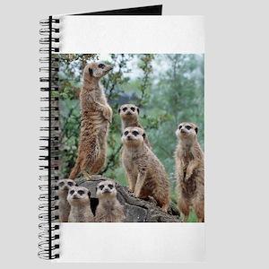 Meerkat010 Journal