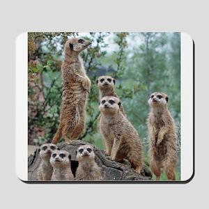 Meerkat010 Mousepad
