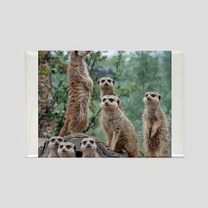 Meerkat010 Magnets