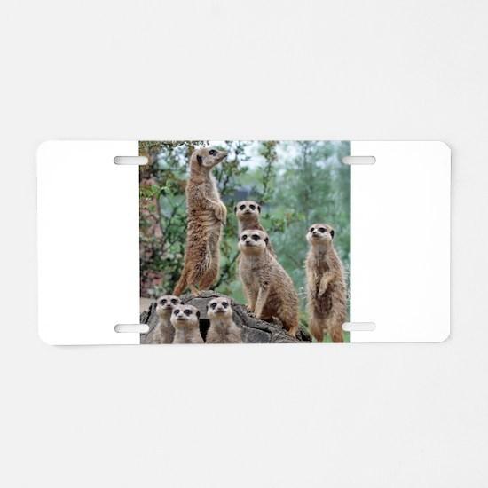Meerkat010 Aluminum License Plate