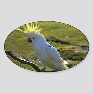 Yellow Sulphur-Crested Cockatoo fro Sticker (Oval)