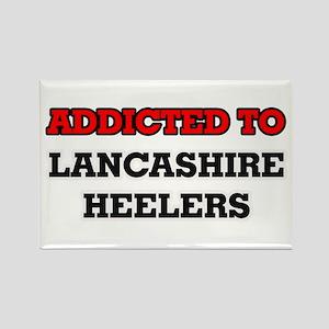 Addicted to Lancashire Heelers Magnets