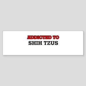 Addicted to Shih Tzus Bumper Sticker