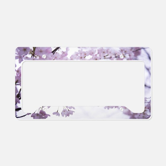 Cute Cherry blossoms License Plate Holder