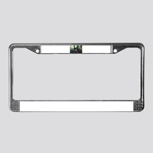 Witch 001 License Plate Frame