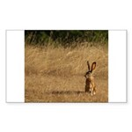 Sitting Jackrabbit Rectangle Sticker