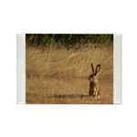 Sitting Jackrabbit Rectangle Magnet (10 pack)