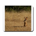 Sitting Jackrabbit Mousepad