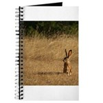 Sitting Jackrabbit Journal