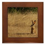 Sitting Jackrabbit Framed Tile