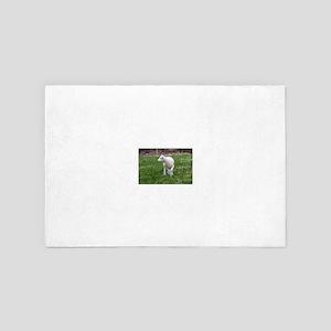 lamb 4' x 6' Rug