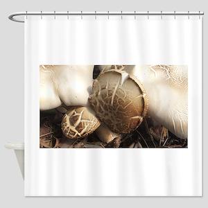 Group of Wild Mushrooms Shower Curtain