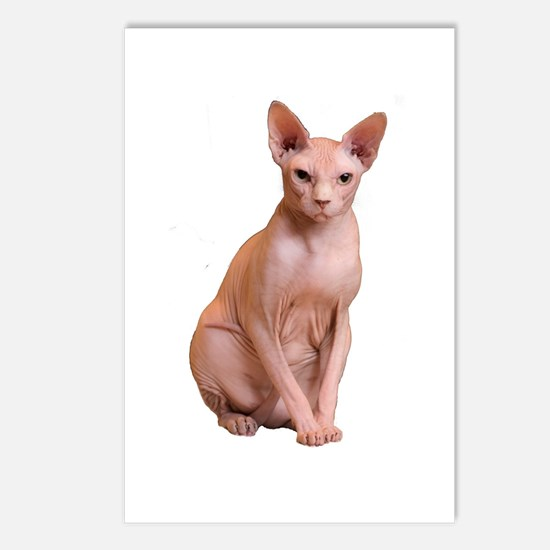 Cool Hairless cat Postcards (Package of 8)