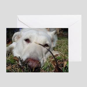 Eva the White German Shepherd Greeting Card
