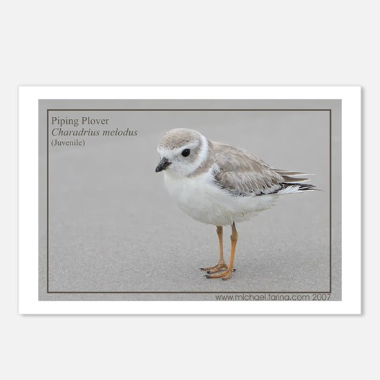 Piping Plover Postcards (Package of 8)