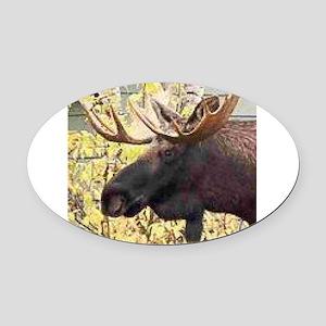 Moose Oval Car Magnet
