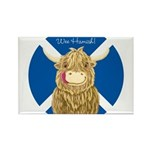 Wee Hamish Highland Cow (Saltire) Magnets