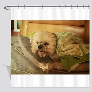 Koko blond Lhasa under green blanke Shower Curtain