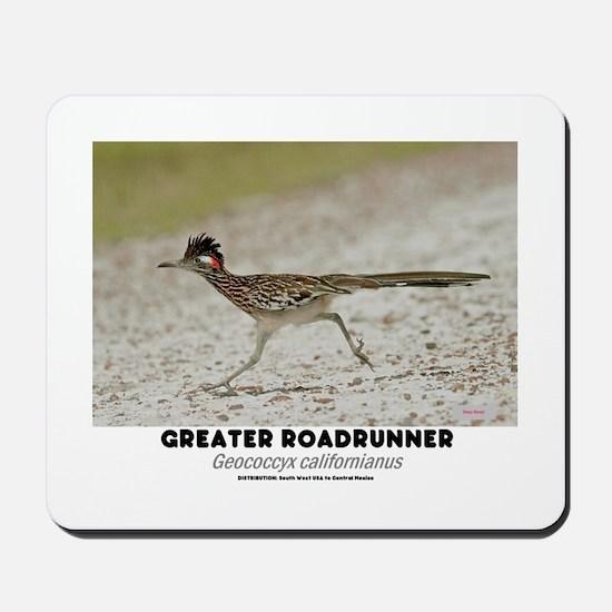 GREATER RADRUNNER - GEOCOCCYX CALIFORNIU Mousepad
