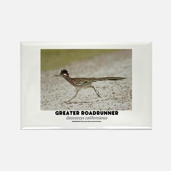 GREATER RADRUNNER - GEOCOCCYX CALIFORNIUS Magnets