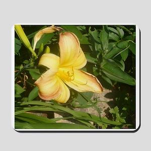 Daylilies Mousepad
