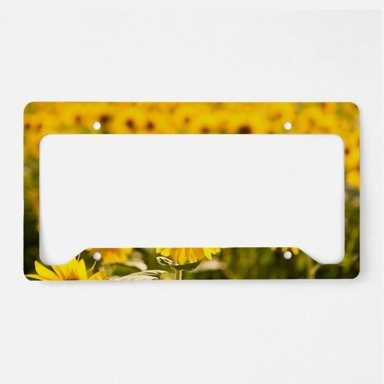 Cute Sunflower License Plate Holder