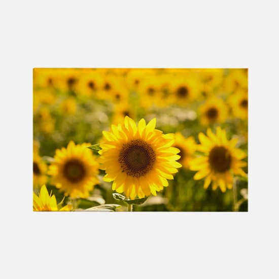 Cool Yellow flowers Rectangle Magnet