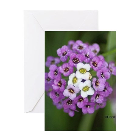 Colorful Alyssum Flower Greeting Cards