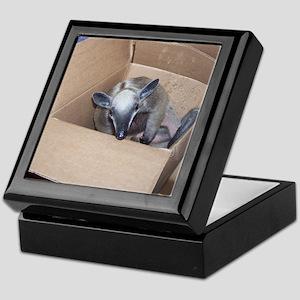 Stewie Keepsake Box