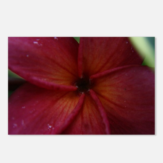 Red Plumeria Postcards (Package of 8)