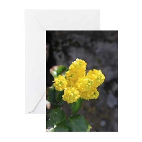 Oregon Grape Flower Greeting Cards