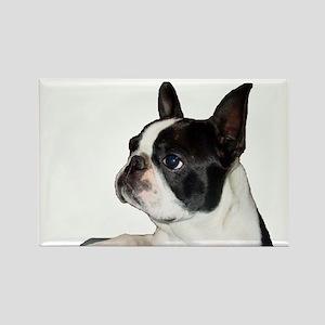 Boston Terrier - Pleading Eye Rectangle Magnet