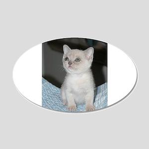 burmese platinum kitten Wall Decal