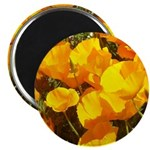 california poppies + wildflowers 2.25