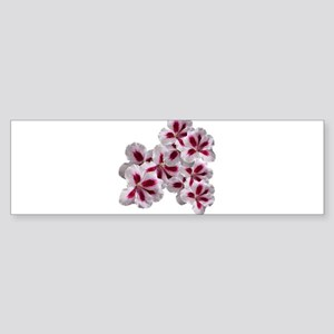 Geranium Flowers Bumper Sticker