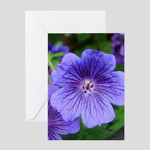 Geranium Flowers Background Greeting Cards