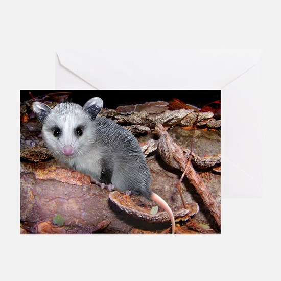 opossum on a log Greeting Cards (Pk of 10)