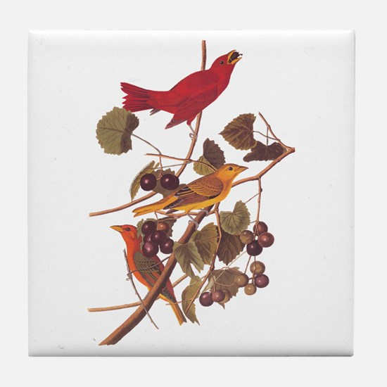 Summer Red Bird Vintage Audubon Tile Coaster