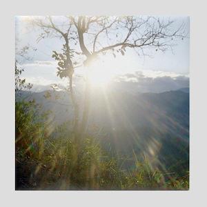 Sun through Tree Tile Coaster