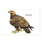 Golden Eagle Bird Postcards (Package of 8)