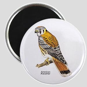 American Kestrel Bird Magnet