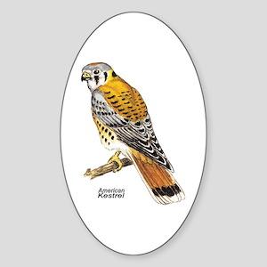 American Kestrel Bird Oval Sticker