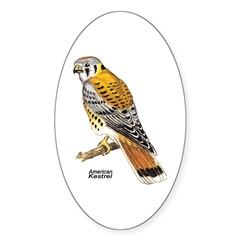 American Kestrel Bird Oval Decal