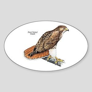 Red-Tailed Hawk Bird Oval Sticker