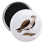 Osprey Bird of Prey Magnet