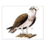 Osprey Bird of Prey Small Poster
