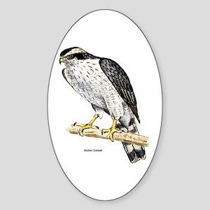 Northern Goshawk Hawk Oval Sticker