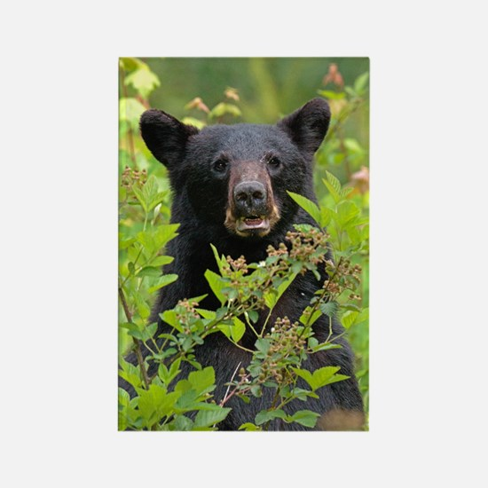 Cute Great basin national park Rectangle Magnet